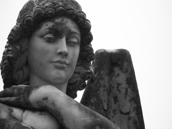 "photo ""angel in cemetary"""